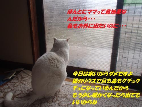 P1200192_convert_20150120130037.jpg