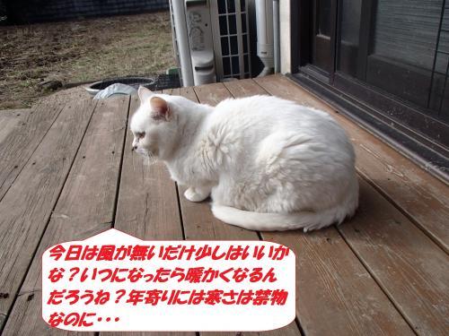 P1220202_convert_20150123124832.jpg