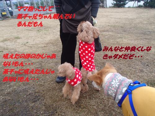 P1230219_convert_20150124122153.jpg