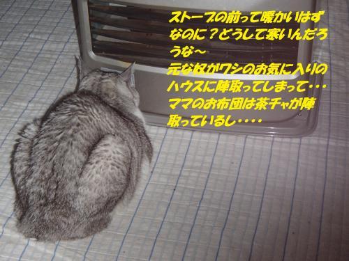 P1260263_convert_20150127123215.jpg