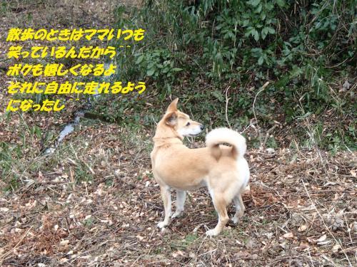 P1280279_convert_20150130074601.jpg