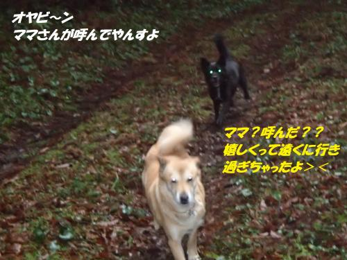 P1280283_convert_20150130074644.jpg