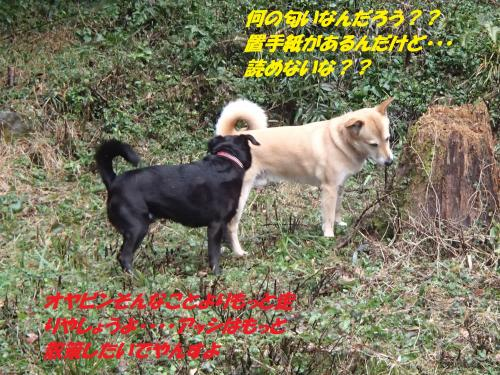 P1280288_convert_20150130074724.jpg