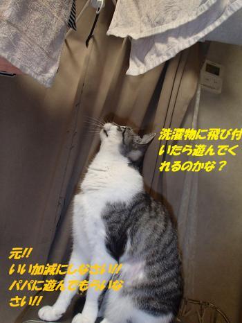 P1290302_convert_20150201124940.jpg