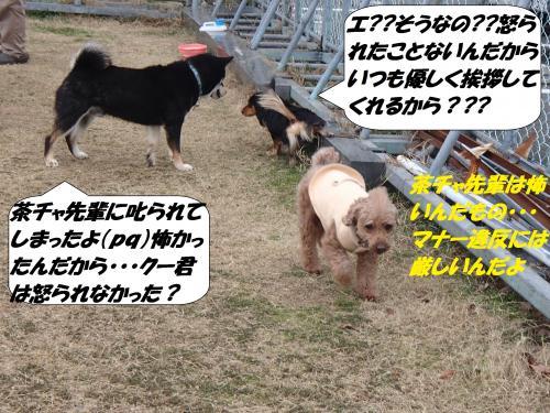 P2010340_convert_20150203160536.jpg
