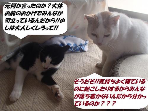 P2040354_convert_20150204131043.jpg