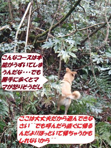 P2060389_convert_20150209135939.jpg