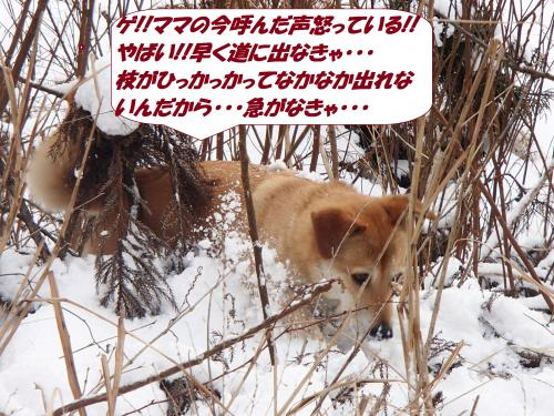 P2090418_convert_20150210123927.jpg