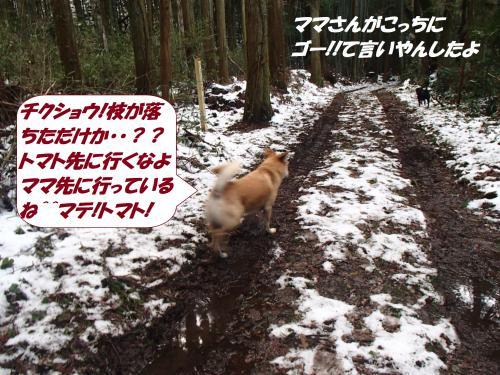 P2100441_convert_20150211135759.jpg