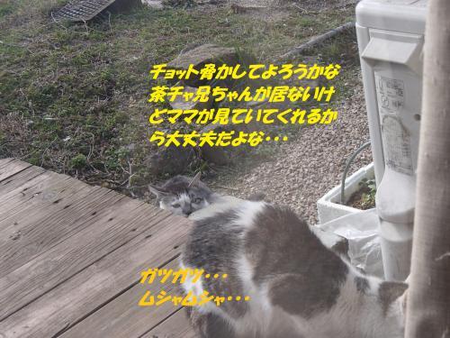 P2200575_convert_20150220125642.jpg