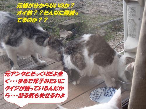 P2200576_convert_20150220125656.jpg