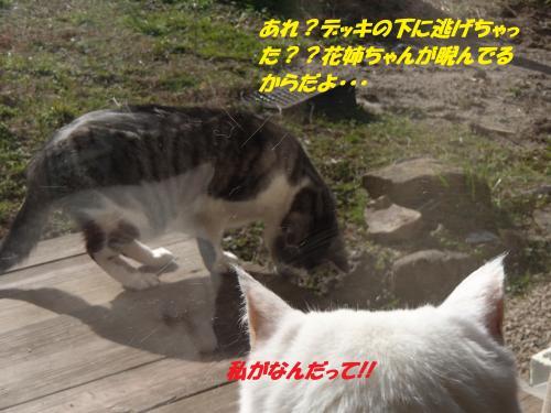P2200577_convert_20150220125710.jpg