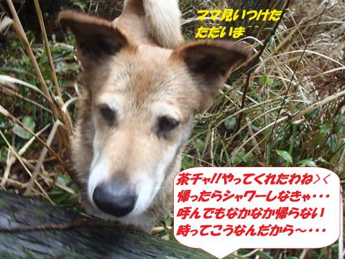 P2220622_convert_20150223103252.jpg