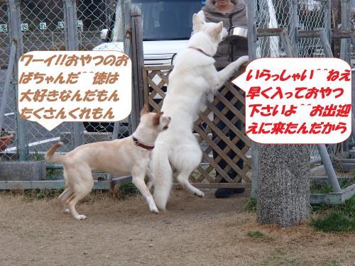 P2260651_convert_20150227144608.jpg