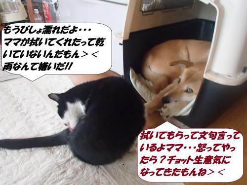 P3010705_convert_20150302171401.jpg