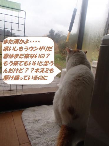 P3010707_convert_20150302171144.jpg