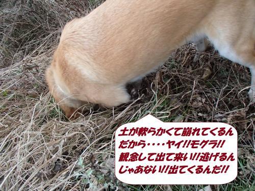 P3050782_convert_20150306132127.jpg