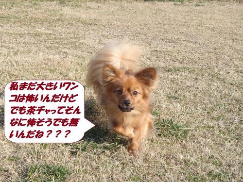 P3060785_convert_20150307130308.jpg