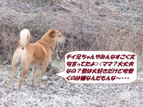 P3100815_convert_20150310130109.jpg