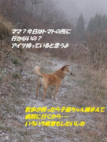 P3100820_convert_20150311104538.jpg