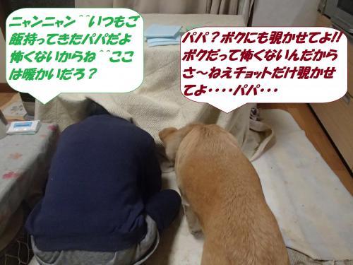 P3100837_convert_20150311104726.jpg