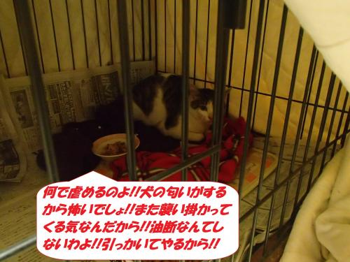 P3110838_convert_20150311104741.jpg