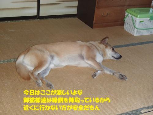 P8140003_convert_20150819131316.jpg