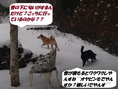 PC180252_convert_20141222124054.jpg