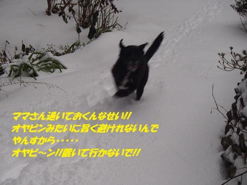 PC180256_convert_20141222124128.jpg