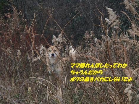 PC220281_convert_20141226073926.jpg