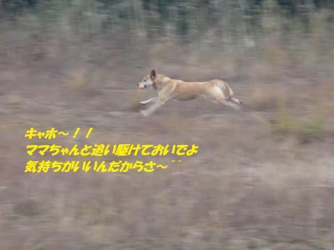 PC230284_convert_20141226073943.jpg