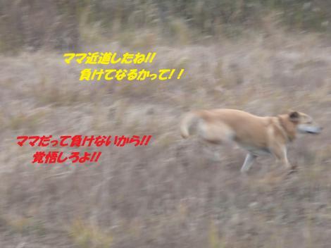 PC230285_convert_20141226073959.jpg