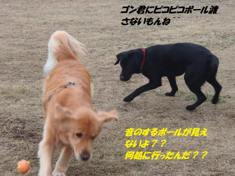 PC230288_convert_20141224143434.jpg