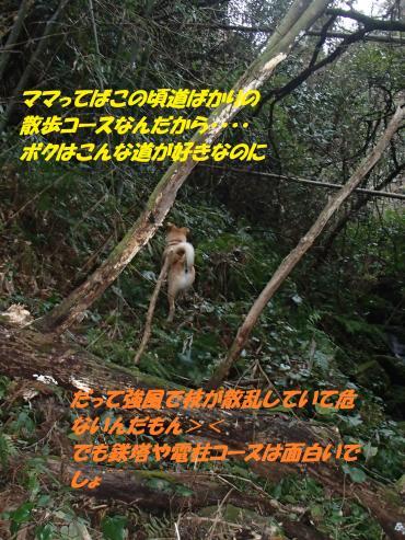 PC240307_convert_20141226073850.jpg
