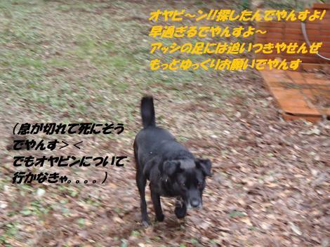 PC240311_convert_20141226074106.jpg