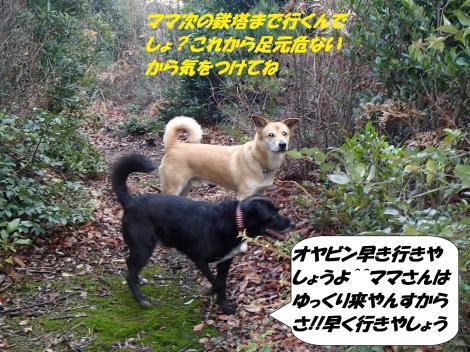 PC250332_convert_20141229092433.jpg