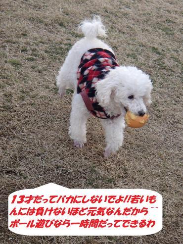 PC270344_convert_20141228102706.jpg