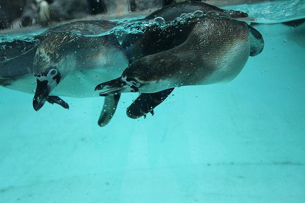sea-creatures2.jpg