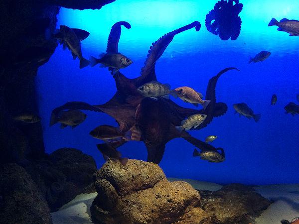 sea-creatures5.jpg