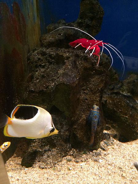 sea-creatures7.jpg
