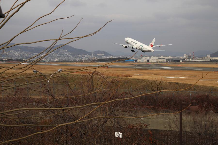 JAL B777-246 / JAL114 (JA8984)@伊丹スカイパーク