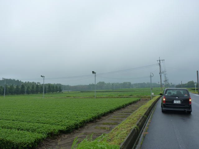 知覧の茶畑