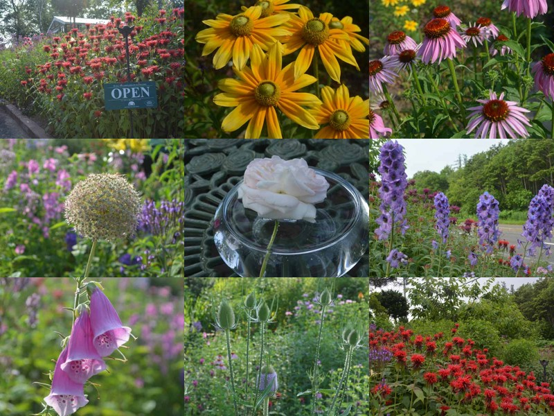 malino_garden.jpg