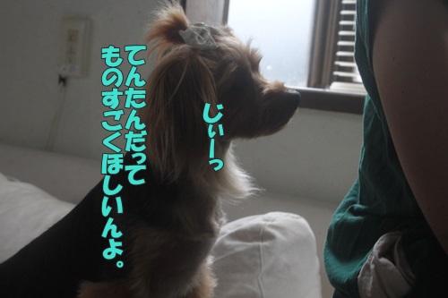 IMG_55930.jpg