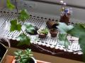 ナンフェア くるみと多肉植物 ミニガーデンセット