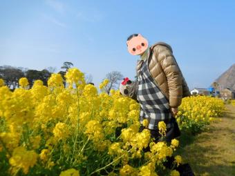 まーみ27w4d菜の花畑にて