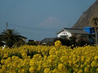 菜の花とうっすら富士山