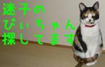 201303231321278b3.jpg