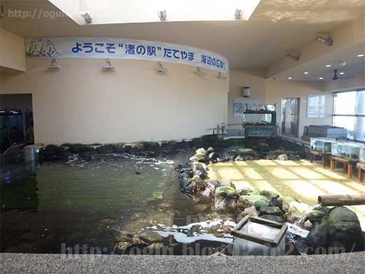 館山渚の駅たてやま海辺の広場渚の博物館003