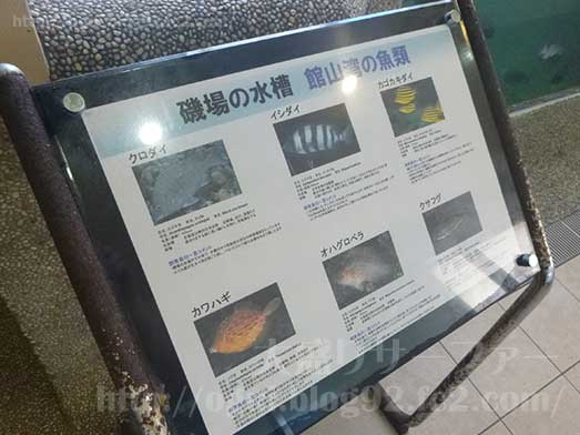 館山渚の駅たてやま海辺の広場渚の博物館004
